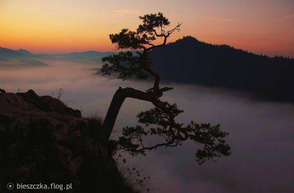 http://s24.flog.pl/media/foto_middle/12328579_dumna-sosna-nad-morzem-chmur.jpg