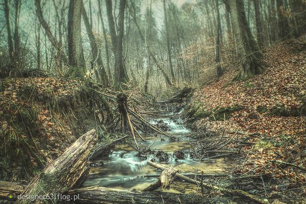 http://s24.flog.pl/media/foto_middle/12343290_lesny-strumien-grodna-w-okolicy-sianowa.jpg