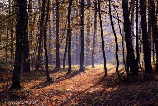 http://s24.flog.pl/media/foto_middle/12345295_gdy-zaskrzypia-drzewa-pojdzmy-sladem-cienia--i-szelestu-.jpg