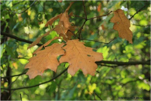 Jesień Zdjęcie Fotoblog Wojciech52wflogpl