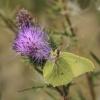 Przemkowskie motylki