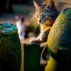 Kocie igraszki ::