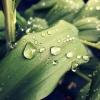 Coś na dobranoc :)  :: Cały dzień deszczowy  Moż<br />e jutro się rozpogodzi..A<br /> na dobranoc, coż innego <br />jak kropelki deszczu