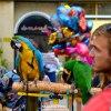 Cześć jestem papugą :)