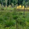 Natura nie pozwala deptać<br /> bagiennych trawników... ::