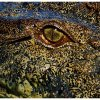 Oko krokodyla - pozdrawia<br />m cieplutko i życzę super<br /> poniedziałku. :)))) ::