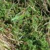 zakamuflowany w trawie :) ::