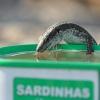 Chłeptanie wody;) :: spotkana na murku przy pr<br />omenadzie w Canico ;))