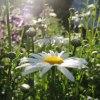 Kwiaty,to moje ukojenie:)