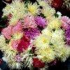 Jesienne kwiaty  :: Miłego dnia
