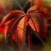 Pierwsze oznaki jesieni .<br />... ::