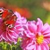 Świat motyli:) :: Z dzisiejszego spaceru:)