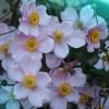 Jakie to kwiaty? ::