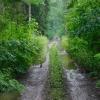 Deszczowy spacer przez La<br />sy Pomiechowskie ::