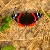 Miłość jest jak motyl ..<br />.choć piękna, to trudna <br />do złapania ...  Im bar<br />dziej za nią gonimy, tym<br /> łatwiej nam ucieka ...  ::