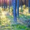 Poranek w lesie:)))piękne<br />go dnia życzę:)) :: Z grzybobrania w Borach..<br />.