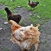 Nasze ptaki;) ...........<br />.. pozdrawiamy