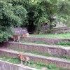 Strrrasznie głodne tygrys<br />y ;)
