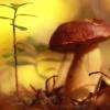 Leśne opowieści:)