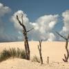 Chmury na drzewach rosną <br />...,w moich wizjach :)