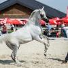 Czempionat koni arabskich<br /> w Michałowicach ;)