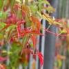Jesienny akcent letnim sł<br />onkiem pieszczony ...Pozd<br />rawiam pogodnego dnia :)