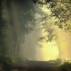 W podziękowaniu za przepi<br />ękną dedykację . Poranek <br />w lesie) dla Ciebie Stefa<br />nie.