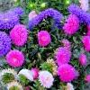jesienne kwiaty dla miłyc<br />h gości z życzeniami najl<br />epszymi