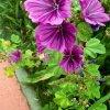 Kwiatowe  poletka  przy <br />Alejech