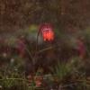Słońcem i deszczem tknięt<br />e