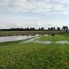 Zrobiło się dzisiaj ładni<br />e, wody jeszcze przybyło <br />i zaczęła zalewać łąkę wi<br />ęc moje szczęście