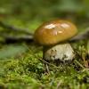 Pora grzybobrania :: Do lasu na grzybki zachęc<br />ili mnie Zahira,Jl3044, g<br />regor,ala55, bert11d  i i<br />ch piękne zdjęcia