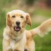 Schroniskowy do adopcji -<br /> uśmiechnięty ... :)