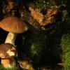 Co dwa, to nie jeden, a w<br />łaściwie, co pięć grzybów<br />, to nie jeden...