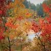 Jesień ::