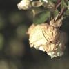 wrześniowa opatulona