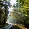 Leśne ścieżki.Dziękujemy <br />Beatko.:)