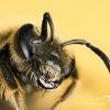 Bee / Pszczoła - Photogra<br />pher London, www.moonflas<br />h.eu