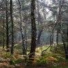 Jesienny las, żywicą cisz<br />a pachnąca …