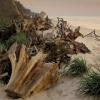 Jesienne i zimowe sztormy<br /> rozłożą je jak kocyki na<br /> plaży... ::