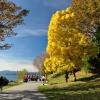 Jesień w Stanley Park.  ::