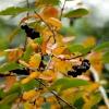 Barwy jesieni. :: Pogoda całkiem niezła... Nie pada,wiatru niema,słonko przebija się przez chmury i jest + 10'C..