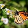 Pazdziernikowy Monarcha d<br />la Carmen