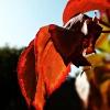 Jesiennie  🍁 🍁 🍁