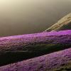 wiosenny krajobraz minima<br />lny ::