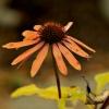 Jesiennie... :: Jesień szybko przyszła,a zimę zapowiadają bardzo srogą,brrr...