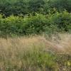 Trawy już suche, buki jes<br />zcze zielone... ::