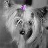 Mó kochany Ronik :* :: &quot;Aby właściwie nacie<br />szyć się psem, nie wystar<br />czy po prostu nauczyć go <br />być prawie człowie