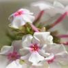 Zaklęte w zapach piękno d<br />oskonałe:)