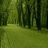 :: *Idąc do Dworzyska---spok<br />ojnego wieczorka życzę *